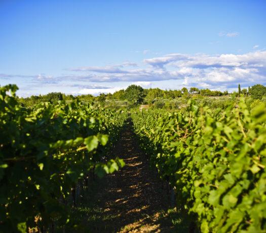 Dubrovnik to Peljesac Wine Tour | Croatia Private Driver Guide