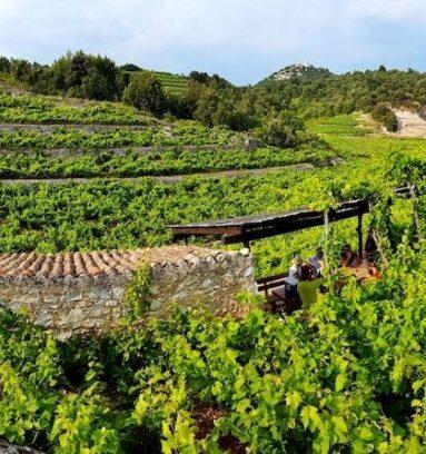 Dubrovnik to Pelješac Wine Tour